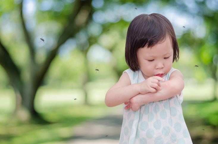 Cara Menghindari Gigitan Nyamuk Penyebar Penyakit